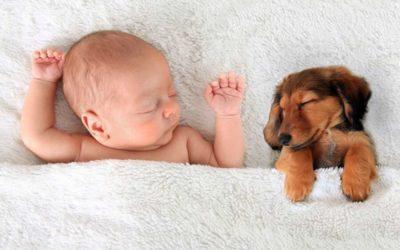 Congress Unanimously Passes Law Protecting Animals, Won't Pass Bills Protecting Preborn Babies